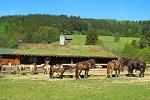 חוות סוסים בצפון