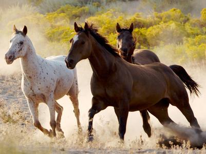 מיתוסים על סוסים