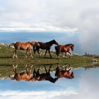 עובדות על סוסים