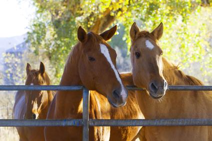 רכיבת סוסים במרכז